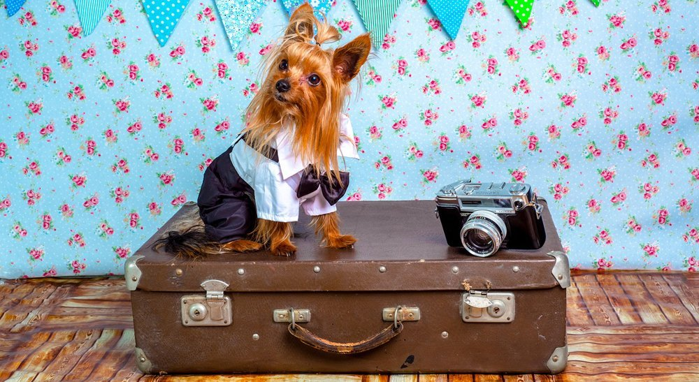 Tips for Safe Pet Air Travel