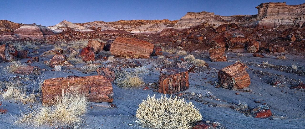 Visiting Petrified Forest National Park